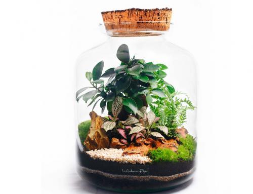 L'arbre à papa, créations végétales – terrariums et kokedamas